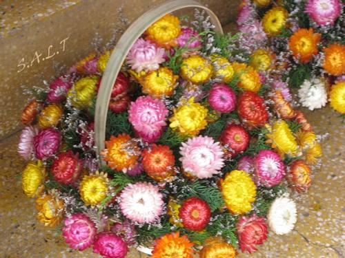 Hoa bất tử ở Đà Lạy đẹp